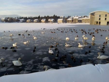 Reyjavik-pond