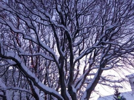 neige_Reykjavik