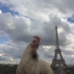 Autostoppeuses Fantastiques : Poule Hop la poule stoppeuse