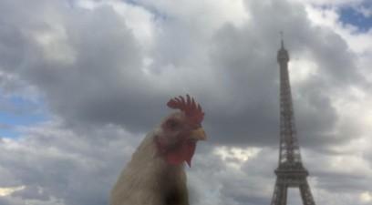 poule-eiffel